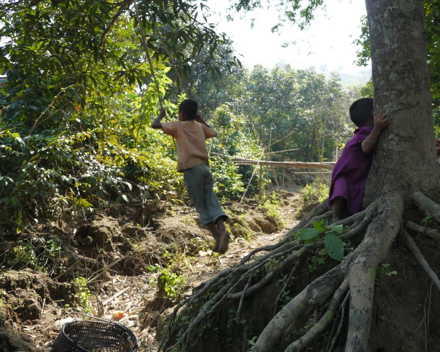 A swing made from jungle vine