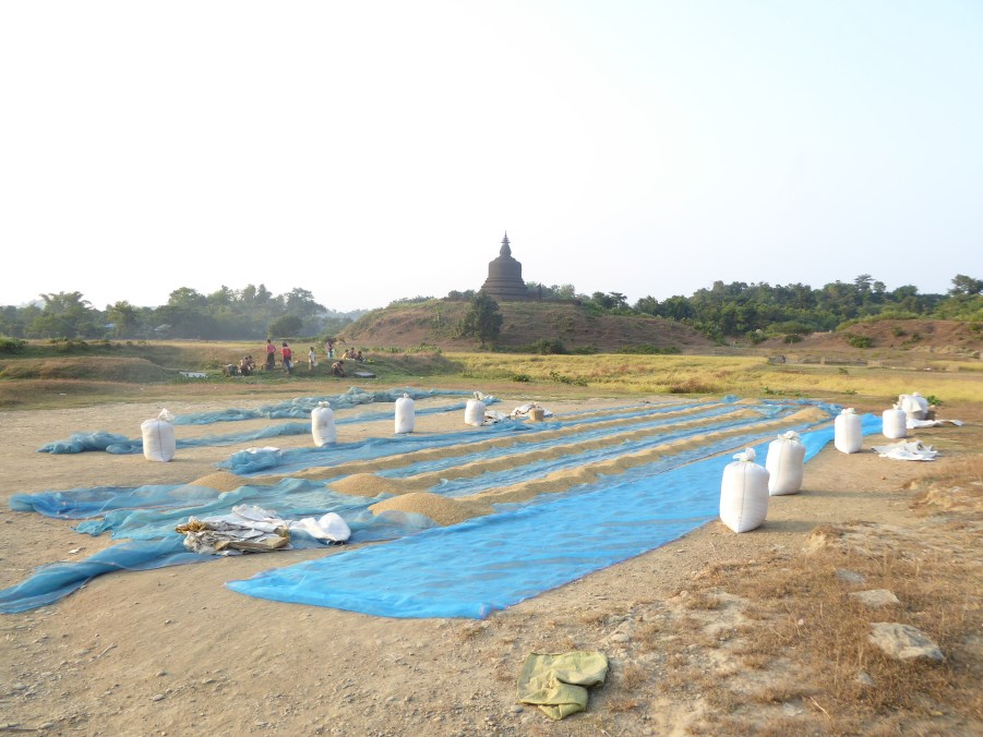 The amazing thing about Mrauk U is that the community still lives in and around the temples.