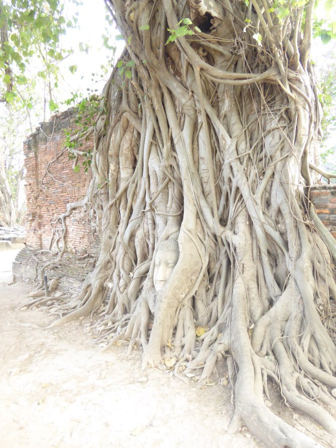 A famous shot ... a Buddha head, fallen off and trapped by the roots of the Boddhi tree (ironic - the same tree type under which he received enlightenment).